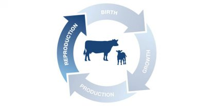 Beef reproduction icon.