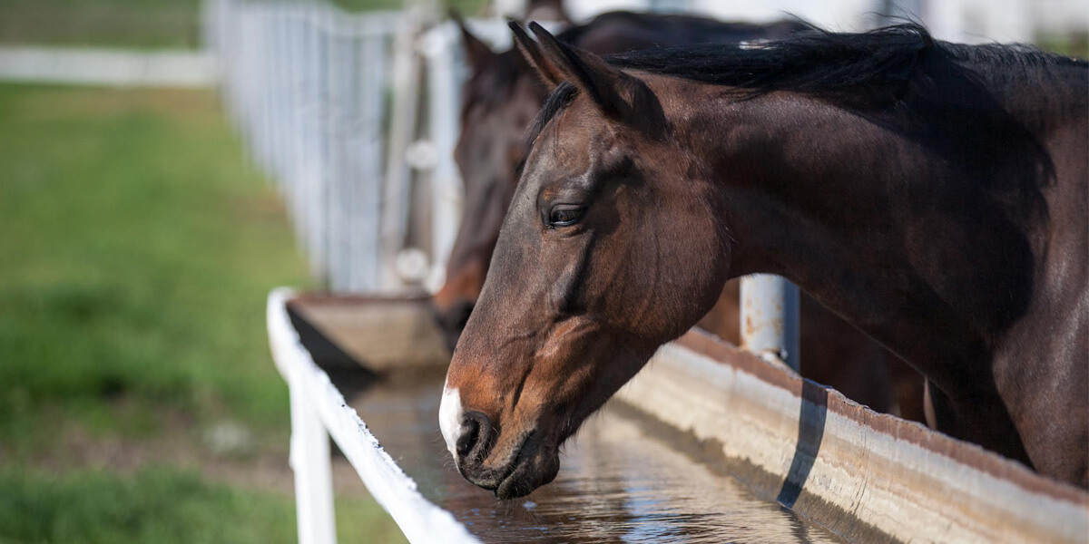 Horse drinking from a water tank.
