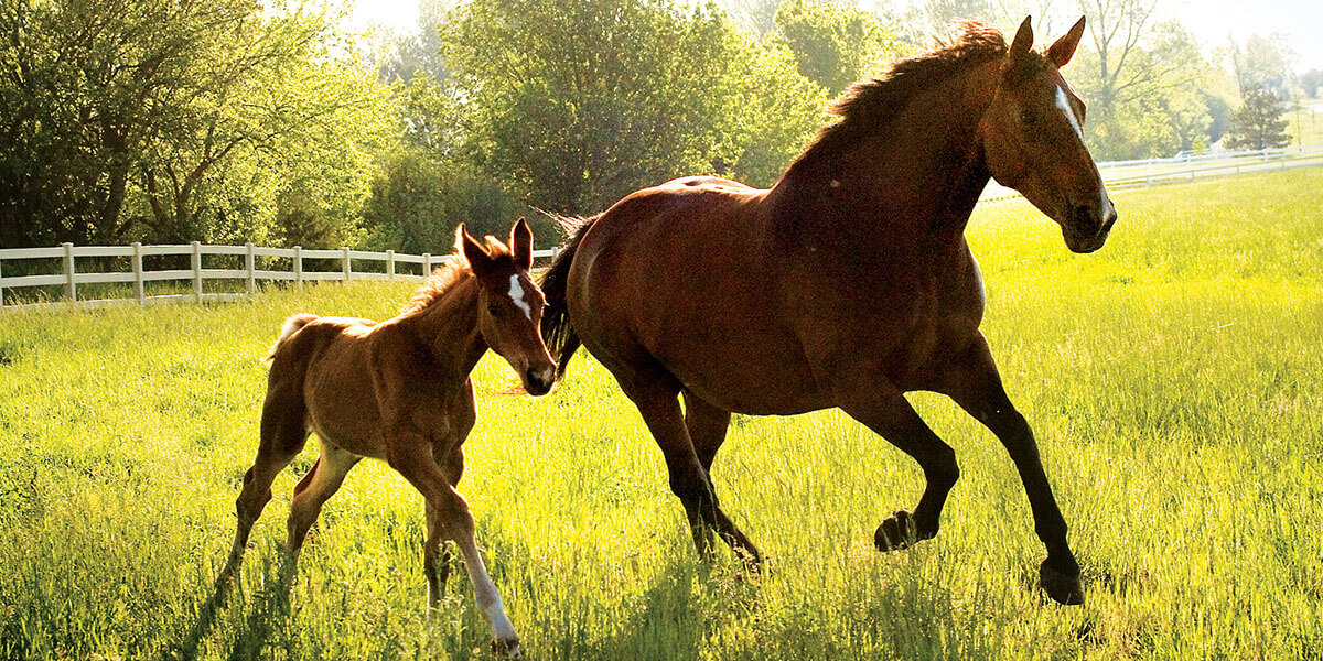Mare and colt running in a pasture.