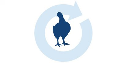 Poultry illustrated image