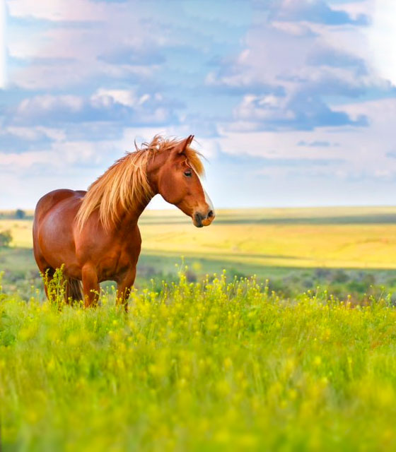 Equine_ContentImage