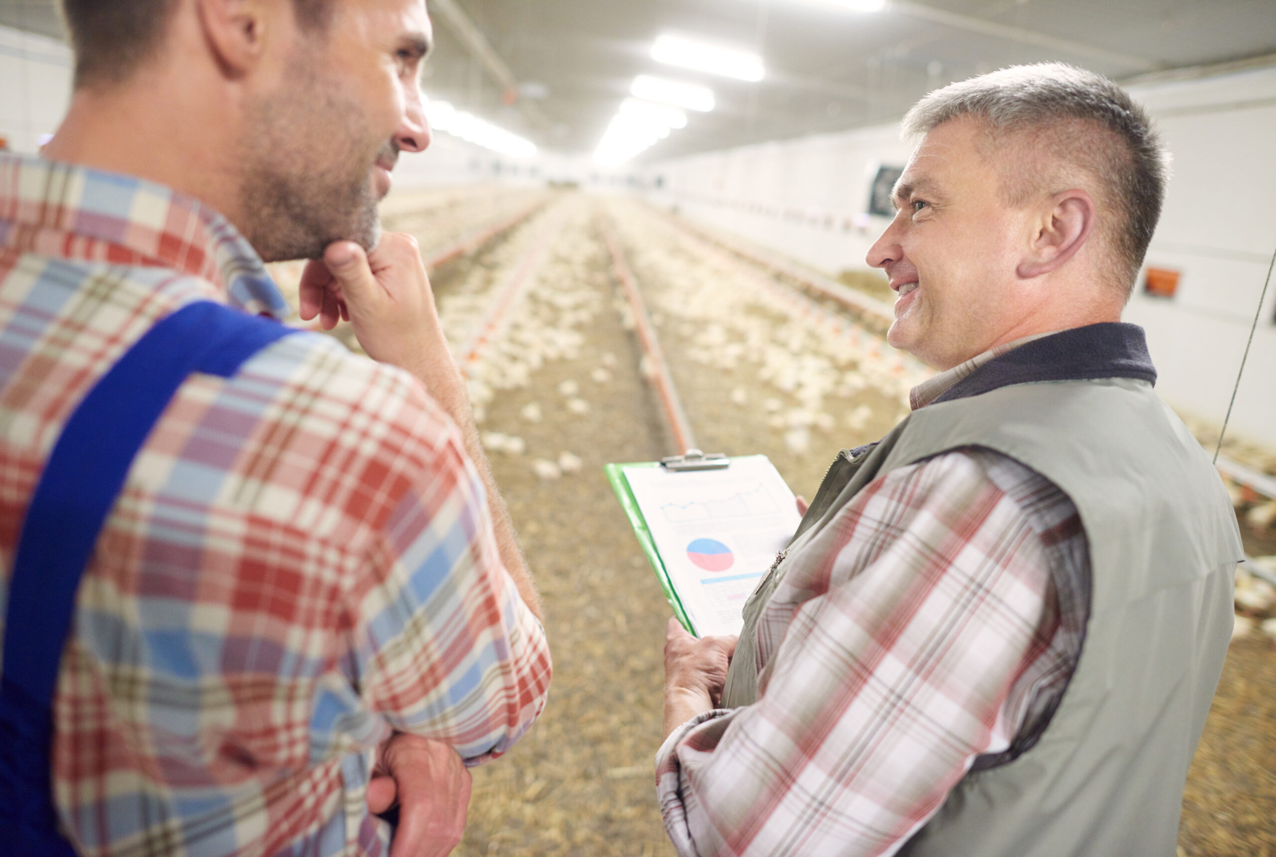 Two farmers talking about poultry business