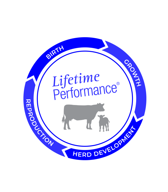 LifetimePerfomance-Beef-560x640