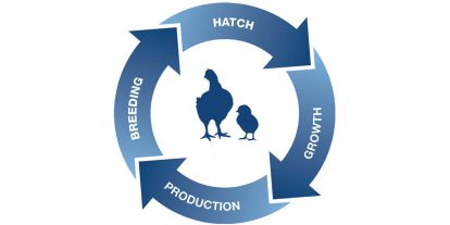 Poultry Lifetime Performance logo.