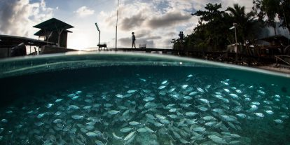 School of fish in the water