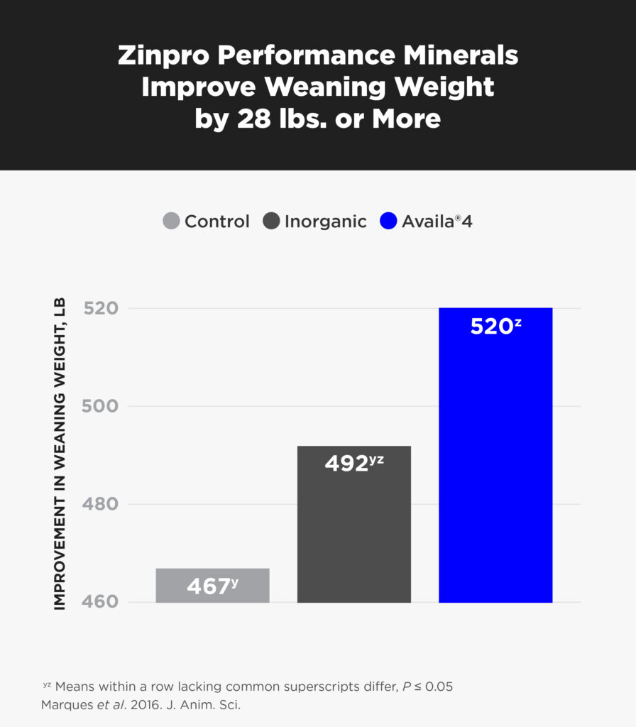 Beef-ZPM-Improves-WeaningWeight