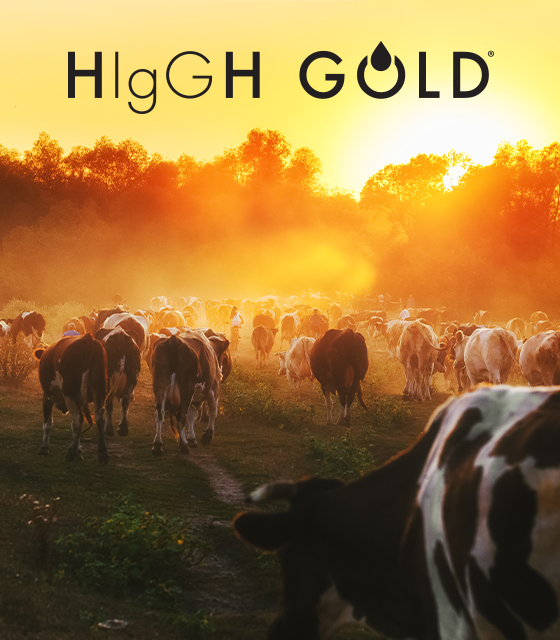 OurBrand-HigGhGold-560x640