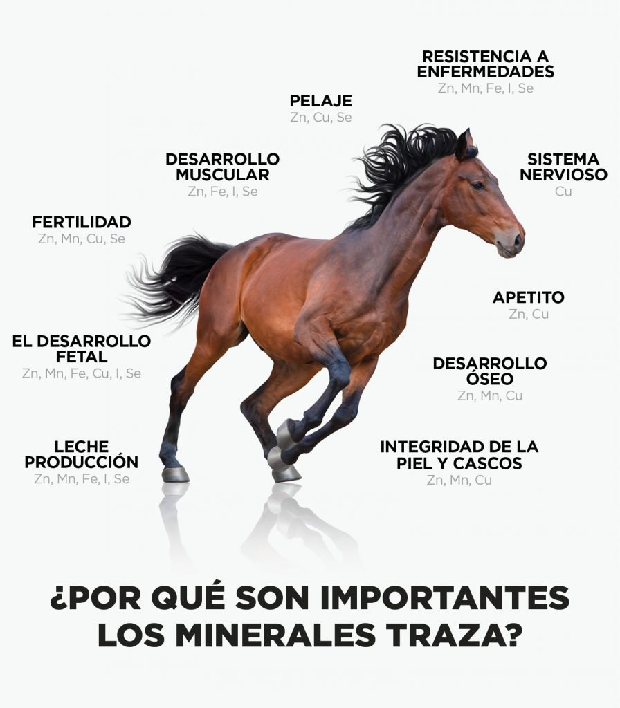 Equine-WhyTraceMinerals